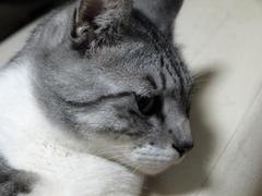 ララ(どあっぷ)